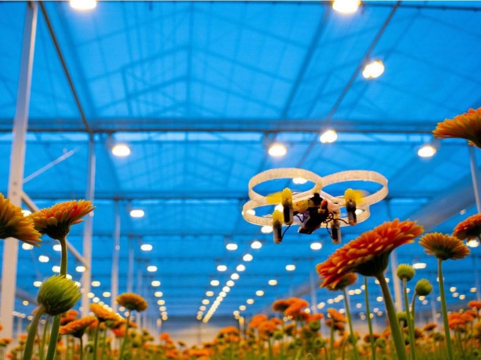 Bestrijding Turkse mot in chrysant met drones moet nog beter