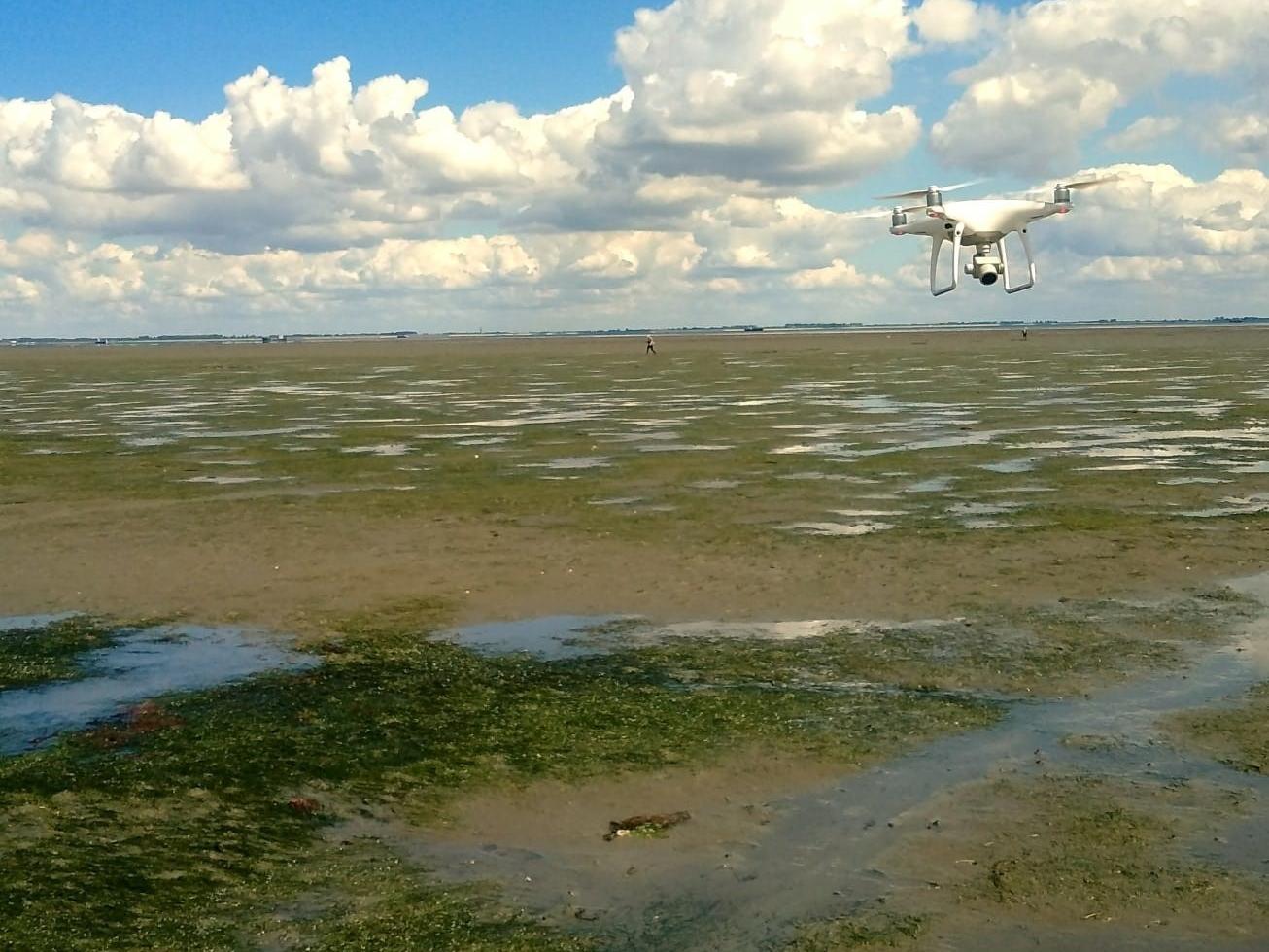 Geslaagd onderzoek naar alternatieve methode voor de monitoring van zeegras