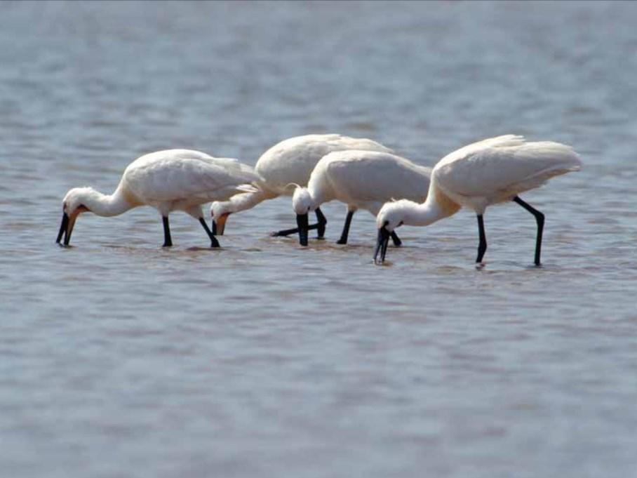 Rijkswaterstaat publiceert richtlijnen voor dronevluchten boven Natura 2000-gebieden
